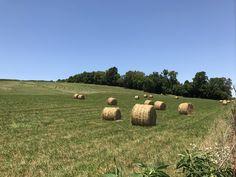 A charming Summer scene in Randolph County. Randolph County, IL. #randolphcountyil
