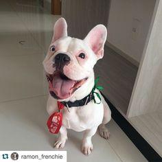 @ramon_frenchie  Happy boy!!!  Good night everyone  #ramonfrenchie #frenchie #frenchies1 #frenchielove #frenchbulldog #frenchiesofinstagram #flatnosedogsociety #thefrenchiepost #theworldofbullies #LOVEABULLY #lacyandpaws #bulldogfrances #bullylife #handsomedog #happydog #cute #dogsofinstaworld #dog #deafdog #doglover #deafdogsrock #dogsofinstagram #pawsandpaws #followme by handsomedogs