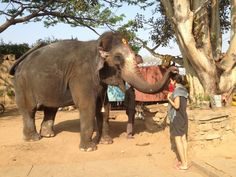 Getting Blessed by Lakshmi, the temple elephant, Hampi, India.