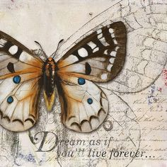 Patricia Pinto Solid-Faced Canvas Print Wall Art Print entitled Living your Dreams I Butterfly Wall Art, Vintage Butterfly, Blue Butterfly, Butterfly Quilt, Butterfly Drawing, Butterfly Kisses, Wall Art Prints, Poster Prints, Canvas Prints