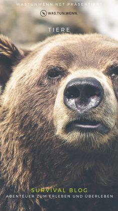 Survival Blog, Brown Bear, Outdoor, Adventure, Group, Board, Nature, Animals, Wild Animals