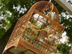 Asian birdcages