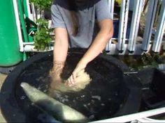 Making Lufa Sponges Outdoor Plants, Outdoor Gardens, Loofah Sponge, Soap On A Rope, Sensory Garden, Vegetable Garden, Herb Garden, Homemade Beauty Products, Cool Plants