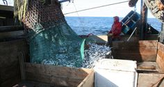 Scientists Call for Tailored Ocean Management Strategies to Avoid Permanent Declines in Fish Stocks