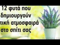 Konmari, Affirmations, Home And Garden, Healing, Herbs, Tips, Plants, Anastasia, Yoga Pants