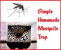 HOMEMADE MOSQUITO TRAP:  Items needed:  1 cup of water   1/4 cup of brown sugar  1 gram of yeast  1 2-liter bottle    HOW:  1. Cut the plastic bottle in half.  2. Mix brown sugar with hot water. Let cool. When cold, pour in the bottom half of the bottle.  3. Add the yeast. No need to mix. It creates carbon dioxide, which attracts mosquitoes.