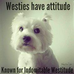 Westie Rescue of North Texas
