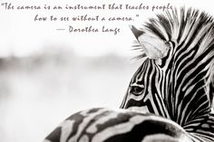 Beth Wold- Modern Wildlife Photography: Art Quotes Friday - Dorothea Lange