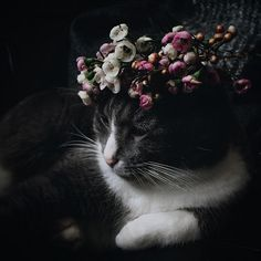 Made a crown out of waxflowers for this little one yesterday. Why? Who knows.