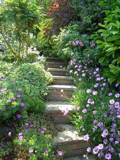 Shed Plans - Ides descaliers pour jardin Meadow Garden, Dream Garden, Garden Steps, Garden Paths, Landscape Design, Garden Design, Balcony Flowers, Lavender Cottage, Sloped Garden