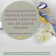 Waar kun jij intens van genieten? . Dat je het leven intens ervaart heeft ook een hele mooie kant zo kun je intens genieten van kleine dingen. . Een vogeltje in de tuin prachtig muziekstuk een kopje thee een goed boek een ontspannend bad enzovoorts... . Waar geniet jij intens van? . Maaike Kruijsen | HSP coach #hoogsensitief #hsp #hooggevoelig #hspcoach #hspcoaching #infj #anders #uniek #authentiek #kwetsbaar #hspbegeleiding #coaching #intuïtie #hspcoach #overprikkeling #attent #zorgzaam…