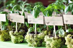 Potted herbs are popular wedding favors, especially at eco-friendly weddings, and they make for a gorgeous escort card presentation as well. Guests will love taking this practical gift home and using the herbs to make their favorite meals. Choose herbs that are most often used in summertime recipes, such as basil, rosemary and dill.