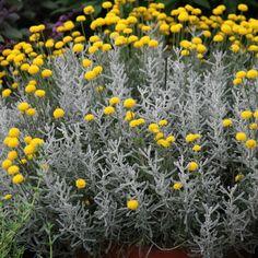 Gravel Garden, Garden Shrubs, Herb Garden, Small Evergreen Shrubs, Mixed Border, Front Flower Beds, Border Plants, Plant Catalogs, Weed Control