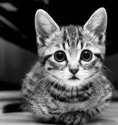 kitten #black #and #white
