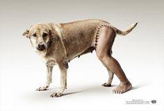 "Handicapped Animal Welfare Foundation: ""Leg"" Print Ad by Euro Rscg Bangkok Funny Animal Pictures, Funny Images, Funny Animals, Funny Pics, Transformers, Green Marketing, Dog Leg, Awareness Campaign, Animal Posters"