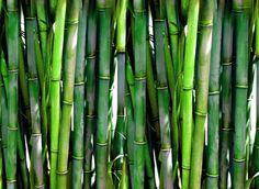 Consejos para incluir en tu hogar esta planta que además de tener un aspecto fresco y natural, es un recurso renovable y sostenible. Más ideas como esta en La Bioguía.