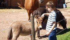 Tierwelt beim Hotel » Familienhotel Tannenmühle Schwarzwald Galloway, Goats, Horses, Animals, Fish Farming, Splash Pad, Petting Zoo, Alpacas, Types Of Animals