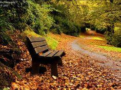 őszi tájkép paddal
