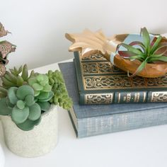 Books and Succulents
