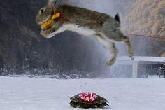 Insólita carrera de esquí en China: Tortuga vence a un conejo en la nieve