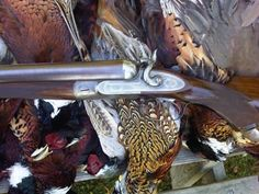 Hunting Dogs, Hunting Stuff, Shotguns, Firearms, Double Barrel, Hunting Accessories, Fly Fishing, Bird, Hunts