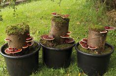 die besten 25 pilze selber z chten ideen auf pinterest pilze z chten waschn sse und anbau. Black Bedroom Furniture Sets. Home Design Ideas