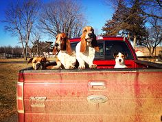 The Pioneer Woman: Motley Crew - a funny post - must read.  Photo by Ree Drummond