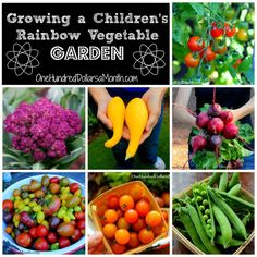 growing potatoes with kids gardens science experiments and science lessons
