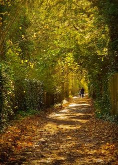 | ? |  Autumn path - Little Weir, Alresford  | by © Anguskirk