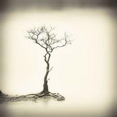 Sparse Tree, photography by Hengki Koentjoro