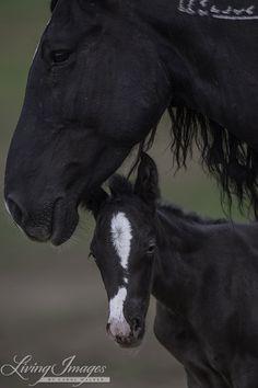 Wild Horses: The Last Adobe Town Foal Arrives at Black Hills Wild Horse Sanctuary