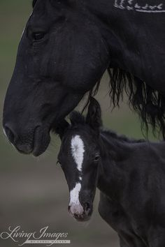 Wild Horses: The Last Adobe Town Foal Arrives at Black Hills Wild Horse Sanctuary