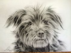 Milly is all finished. Enjoyed the challenge of all that hair!