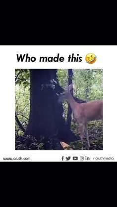 Funny Videos Clean, Some Funny Videos, Funny Video Memes, Crazy Funny Memes, Funny Relatable Memes, Funny Animal Quotes, Animal Jokes, Funny Animal Videos, Cute Funny Animals