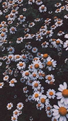 Papier peint 133 - Fond d& / Fonds d& # fondd & # écran . Floral Wallpaper Iphone, Iphone Background Wallpaper, Pastel Wallpaper, Tumblr Wallpaper, Aesthetic Iphone Wallpaper, Nature Wallpaper, Aesthetic Wallpapers, Wallpaper Wallpapers, Daisy Wallpaper