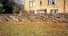 hedgelaying is amazing