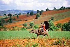 Boys riding a buffalo in Shan State in Myanmar