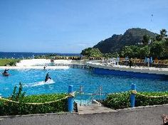 """Sea Life Park Hawaii Swam with dolphins here.  The park where """"50 first dates"""" was filmed."""