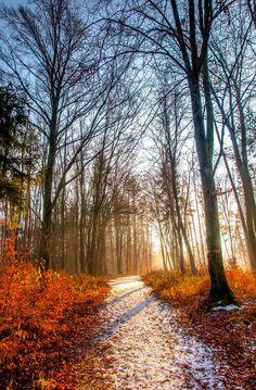 Snow falls on the autumn path (Austria) by fOtoKraft / 500px