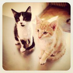 Cookie et Théo, lors de leur première visite vétérinaire à 8 semaines, on ne peut plus détendus sur la table de consultation…