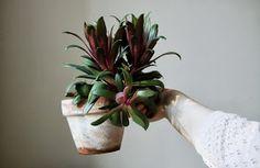 Belle Fleur de Lis: plants and crochetwork