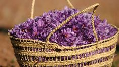 The Egyptians commonly used saffron to increase feelings of lust and enhance sexual pleasure, as it is a powerful aphrodisiac, and supreme in love sachets and oils. -- Saffron Magical Properties and Uses