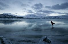 Для вдохновения и создания зимнего настроения - Форум