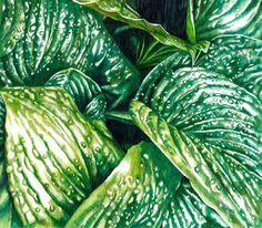 Shop online for botanical art. Droplets by Adele van Heerden, beautiful ink on drafting paper artwork of wet leaves, size 57 x 51 x 4 cm framed. Tulip Drawing, Art For Sale Online, Paper Artwork, Botanical Art, Online Art Gallery, Adele, Plant Leaves, Van, African
