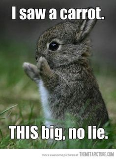 This Big  #cute #carrot #bunny #animals