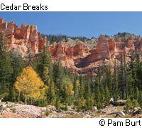 More beauty in Souhern Utah - Cedar Breaks