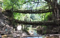 this bridge is built out of the tree roots.in the village of Cherrapunji in state of Meghalaya-known as one of the wettest places in world-builds bridges out of tree roots.its amazing how villagers do this. Taj Mahal, Old Bridges, Northeast India, South India, Visit India, Tree Roots, Weird And Wonderful, Photos, Pictures