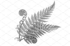 Silver Fern Pencil Illustration by Anna Repp Illustration on Fern Tattoo, Feniks Tattoo, Geometric Tattoo Design, Floral Tattoo Design, Mushroom Tattoos, Silver Fern, New Zealand Art, Piercing Tattoo, Piercings