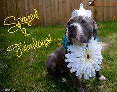 StubbyDog's Spayed + Fabulous/Neutered + Proud campaign to help curb overpopulation and lower the amount of dogs who are destroyed in shelters.