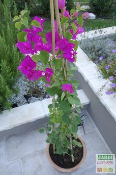 Outdoor Zen Garden Diy, Outdoor Gardens, Fake Plants Decor, Plant Decor, Bougainvillea, Container Plants, Container Gardening, Comment Planter, Pothos Plant